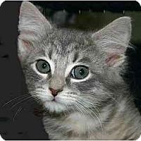 Adopt A Pet :: Gaia - Montgomery, IL