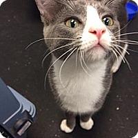 Adopt A Pet :: Rumpus - Fullerton, CA