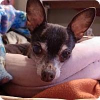Adopt A Pet :: Gabriel - Poulsob, WA