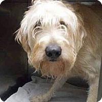 Adopt A Pet :: Lucky - Gainesville, FL