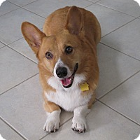 Adopt A Pet :: Winston - Lomita, CA