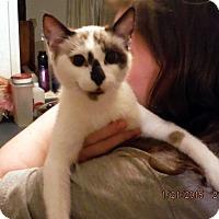 Adopt A Pet :: Buttons - Saint Albans, WV