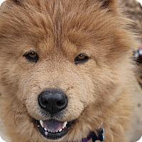 Adopt A Pet :: Pebbles - Tucker, GA