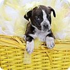 Adopt A Pet :: River Puppy #4: Amazon