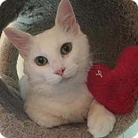 Adopt A Pet :: Tony Spumoni - Merrifield, VA