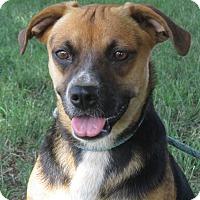 Adopt A Pet :: Charlotte - Turlock, CA