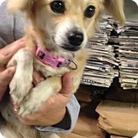 Adopt A Pet :: Blondie - mooresville, IN