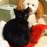 Adopt A Pet :: Binxy - Bentonville, AR