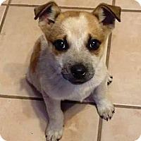 Adopt A Pet :: Sassy - Aurora, CO