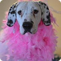 Adopt A Pet :: Dottie - New Oxford, PA