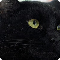 Adopt A Pet :: Louie Armstrong - St. Louis, MO