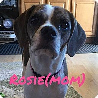 Adopt A Pet :: Rosie - Rexford, NY