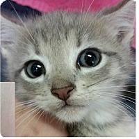 Adopt A Pet :: Miguel - Springdale, AR