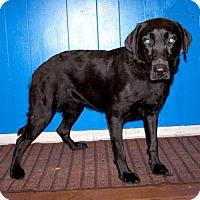 Adopt A Pet :: 16-d06-001 Clover - Fayetteville, TN