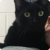 Adopt A Pet :: Max - Gadsden, AL