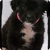 Adopt A Pet :: Naomi - Old Saybrook, CT