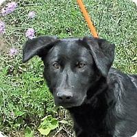 Adopt A Pet :: **KNOX** MEET AUG 6TH! - Mukwonago, WI