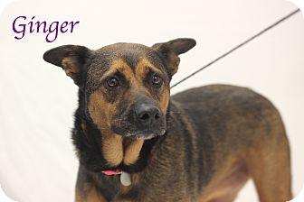 Shepherd (Unknown Type) Mix Dog for adoption in Bradenton, Florida - Ginger