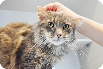 Domestic Mediumhair Cat for adoption in Lincoln, Nebraska - Lucy