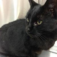 Adopt A Pet :: JoJo - Rockaway, NJ