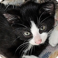 Adopt A Pet :: Diablo - Garland, TX