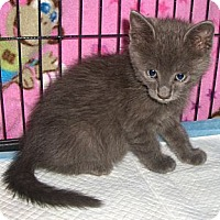 Adopt A Pet :: Clay - Richmond, VA