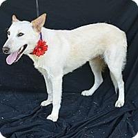 Adopt A Pet :: Marnie - Plano, TX