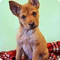 Adopt A Pet :: *Harley - PENDING - Westport, CT