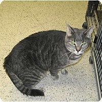 Adopt A Pet :: Katie - Warminster, PA