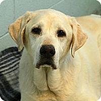 Adopt A Pet :: Milo - Muskegon, MI