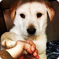 Adopt A Pet :: Fargo - Parker, CO