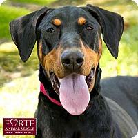 Adopt A Pet :: Clobie - Marina del Rey, CA