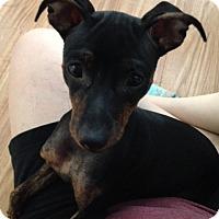 Adopt A Pet :: Misty - Las Vegas, NV