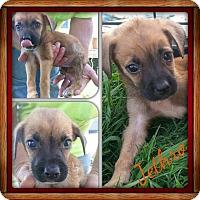 Adopt A Pet :: Jethro - Stamford, CT