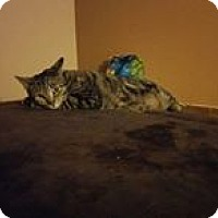 Adopt A Pet :: Abby - Staten Island, NY