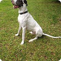 Adopt A Pet :: Hawkeye - Austin, TX