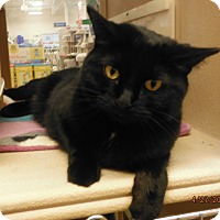 Adopt A Pet :: Shadow - Toledo, OH