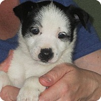 Adopt A Pet :: Otto - Allentown, PA