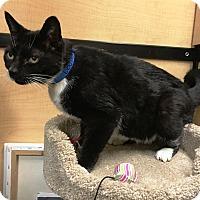 Adopt A Pet :: Maxwell - Riverside, CA