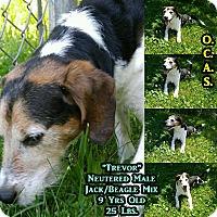 Adopt A Pet :: 1-9 Trevor - Triadelphia, WV