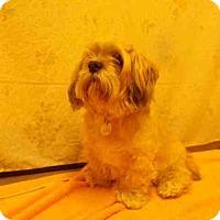 Adopt A Pet :: DORI - Upper Marlboro, MD