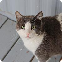 Adopt A Pet :: Theo #2 - El Cajon, CA