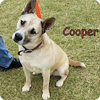 Adopt A Pet :: Cooper - Weatherford, OK
