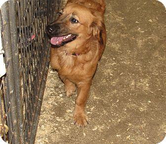 Shih Tzu Mix Dog for adoption in Walthill, Nebraska - Angel