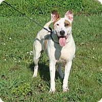 Adopt A Pet :: Louie - Cameron, MO