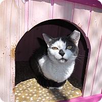 Adopt A Pet :: Candid - Carmel, NY