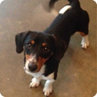 Adopt A Pet :: Vinny - E. Greenwhich, RI