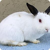 Adopt A Pet :: Louie - Bonita, CA