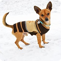 Adopt A Pet :: Pete - Neenah, WI