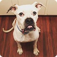 Adopt A Pet :: Klaus - Orlando, FL
